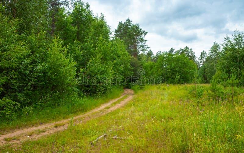Camino rural vacío en el bosque del verano, paisaje imagenes de archivo