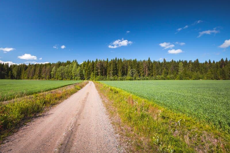 Camino rural vacío volcar el campo verde foto de archivo libre de regalías