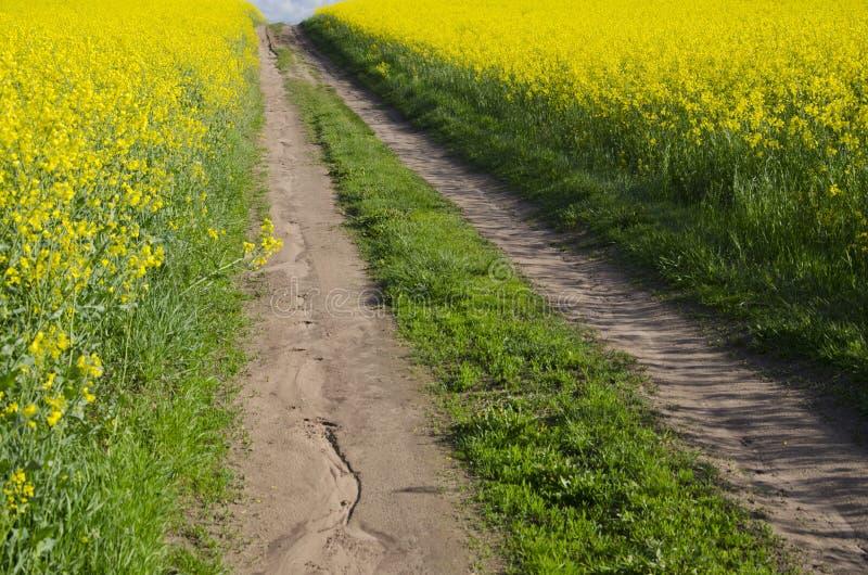 Camino rural y campos florecientes de la rabina fotos de archivo