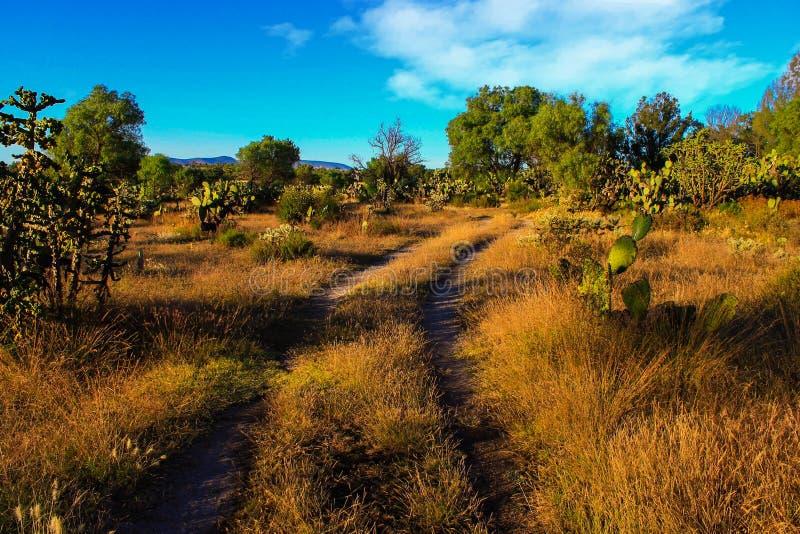 Camino rural y cielo azul brillante con las nubes imagen de archivo