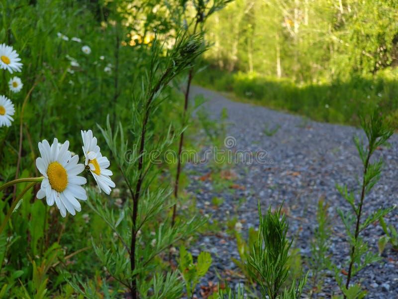 Camino salvaje y buena mañana imagenes de archivo