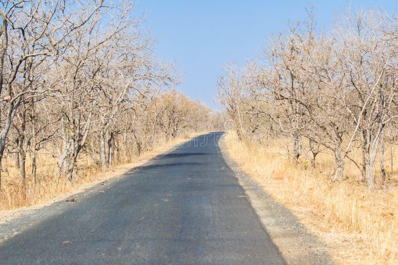 Camino seco del bosque de hojas caducas y del alquitrán en verano foto de archivo