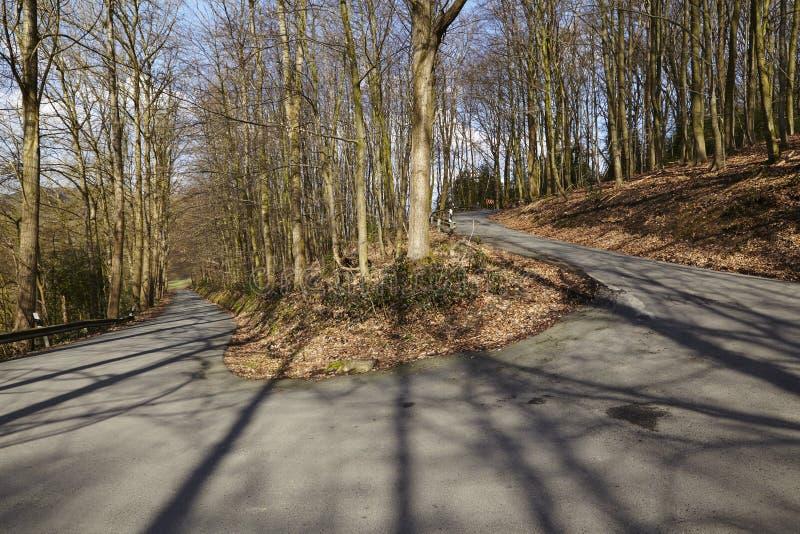Camino - serpentina en un bosque imagen de archivo libre de regalías