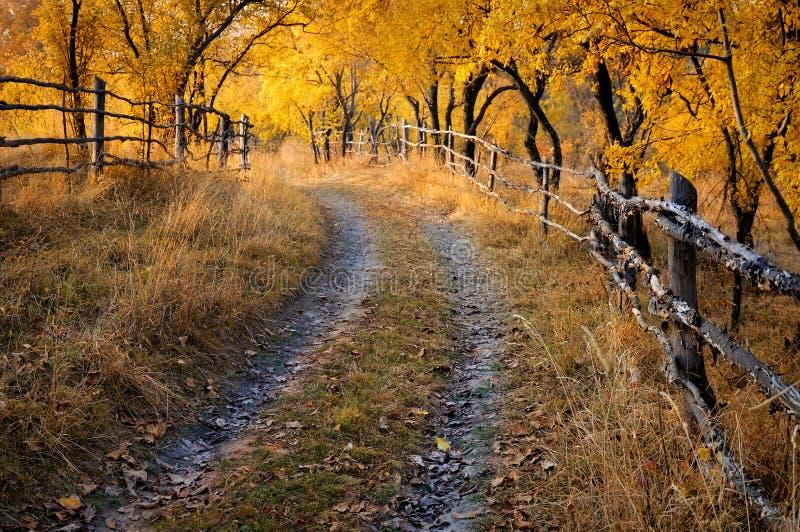 Camino sin pavimentar a través de una huerta en otoño foto de archivo