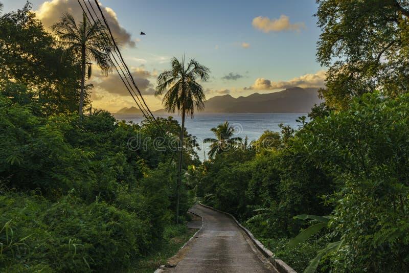 Camino solo en la selva, Seychelles 1 imagen de archivo