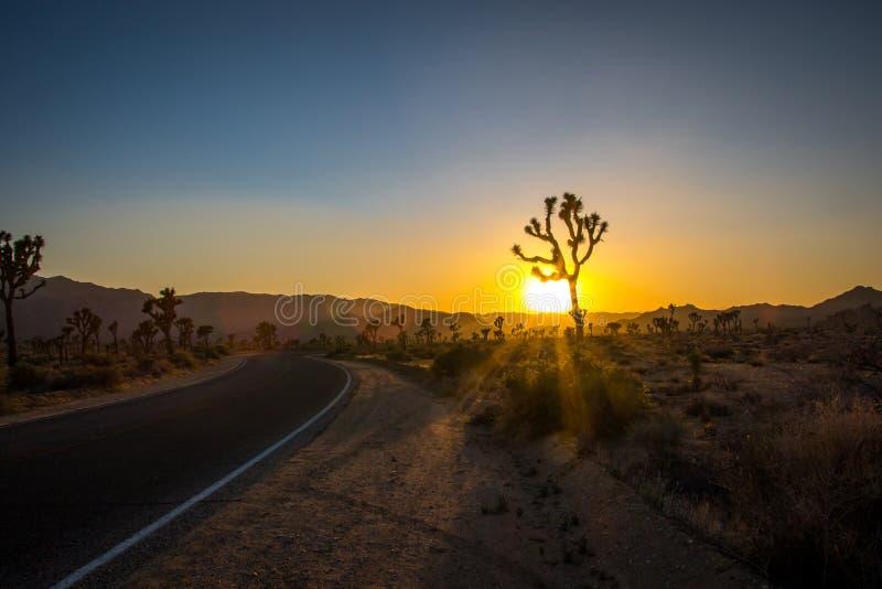 Camino solo a Joshua Tree en la puesta del sol fotografía de archivo libre de regalías
