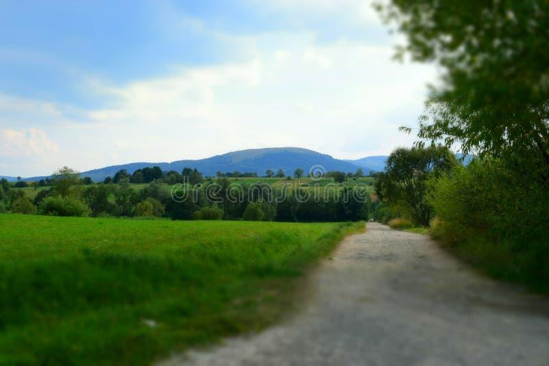 Camino a través de campos verdes en Cárpatos fotos de archivo libres de regalías