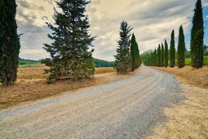 Camino a través de cipreses en Toscana imagen de archivo