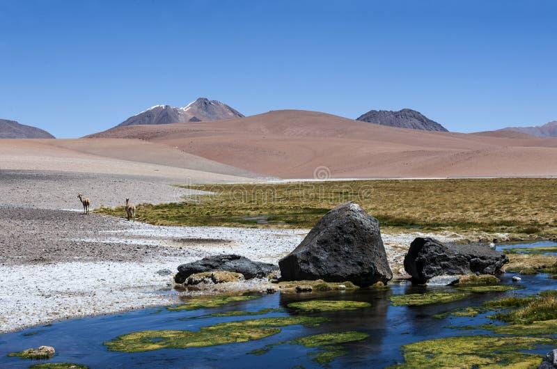 Camino a través de los Andes cerca de Paso Jama, Atacama fotos de archivo