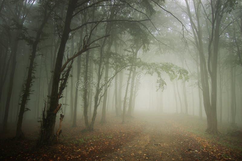 Camino a través de un bosque hermoso con niebla fotografía de archivo libre de regalías