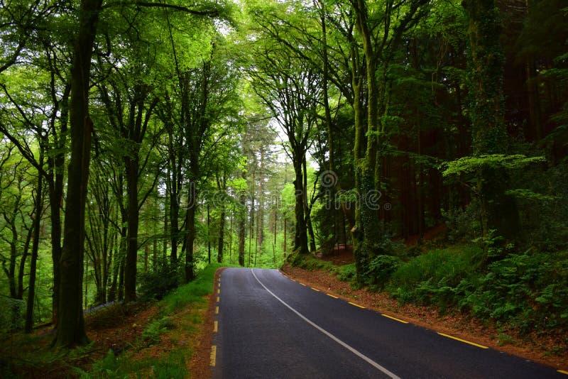 Camino a través del bosque imagenes de archivo
