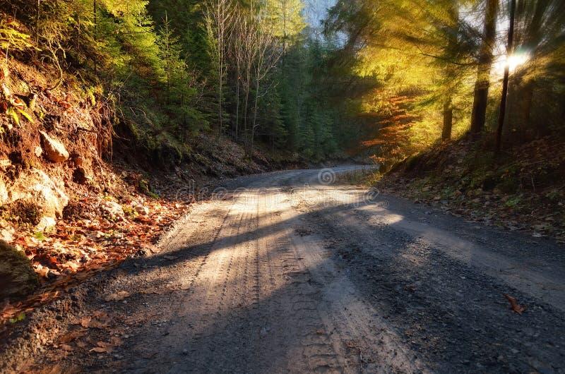 Camino a través del bosque del abeto imágenes de archivo libres de regalías