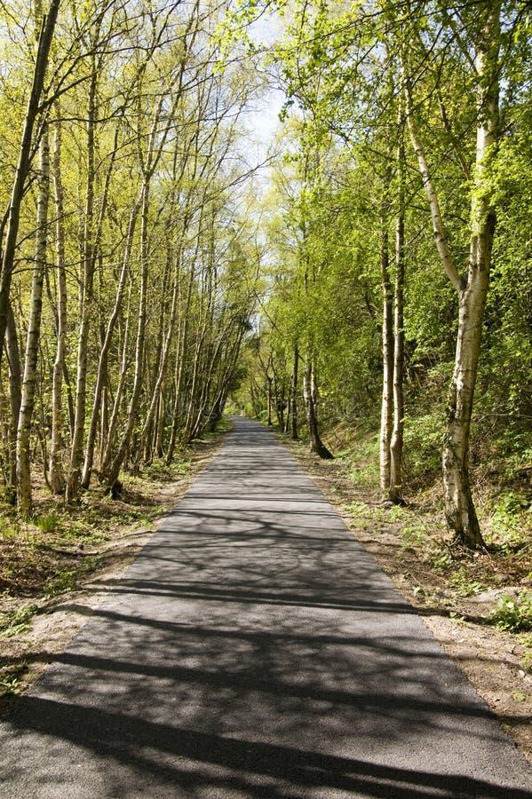 Camino a través del bosque escénico fotografía de archivo libre de regalías