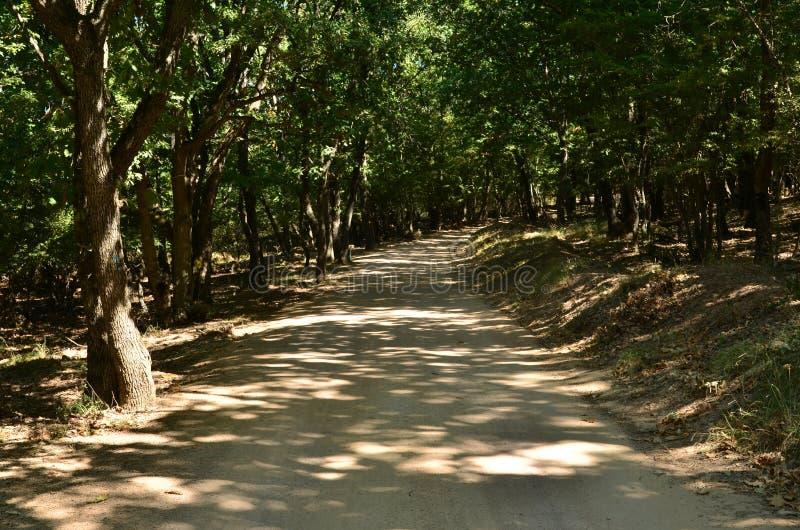 Camino a través del bosque del verano imagen de archivo libre de regalías