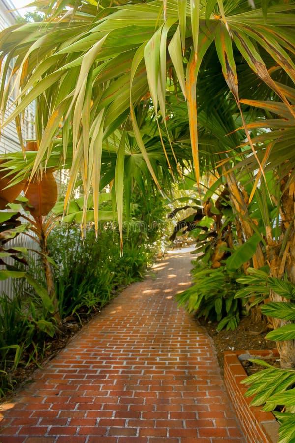 Camino tropical del paraíso - trayectoria que camina del ladrillo a través y debajo de las palmas y de otras plantas tropicales - foto de archivo