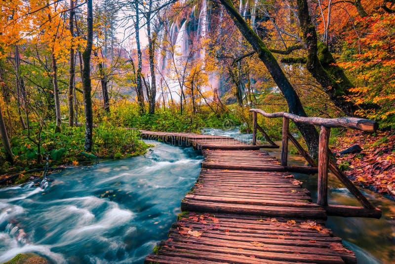 Camino tur?stico hermoso en el bosque colorido del oto?o, lagos Plitvice, Croacia imagen de archivo