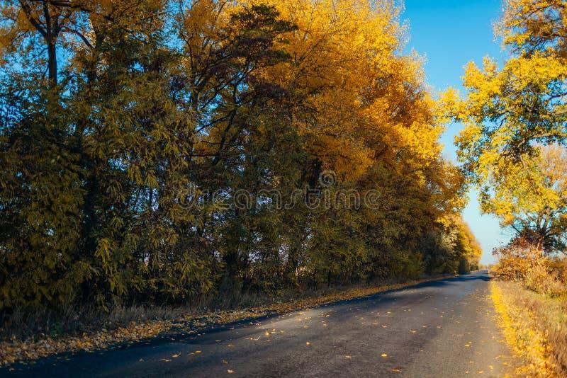 Camino vacío del otoño rodeado con los árboles amarillos Suburbios hermosos fotografía de archivo libre de regalías