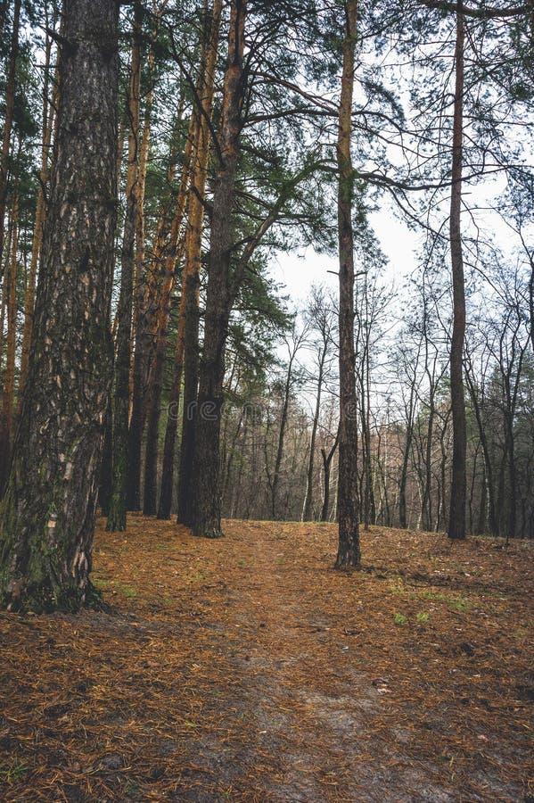 Camino viejo en el bosque del pino en tiempo del otoño fotos de archivo
