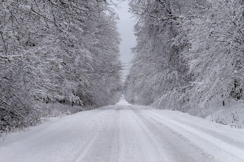 Camino y árboles cubiertos en nieve blanca fresca gruesa imagen de archivo