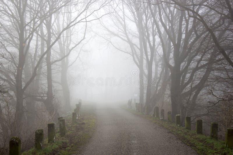 Camino y árboles de niebla Paisaje de la madrugada, Alemania imagen de archivo