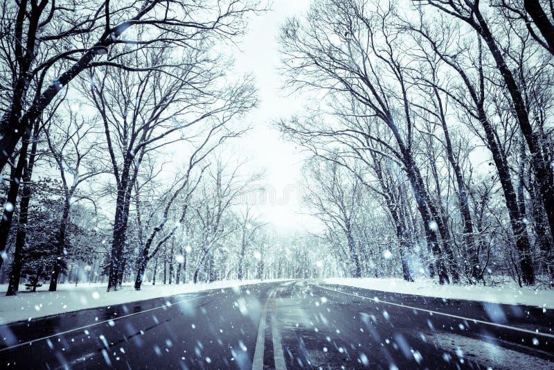 Camino y árboles del día Nevado fotografía de archivo libre de regalías
