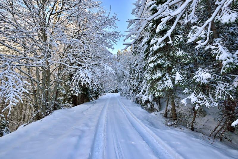 Camino y árboles del invierno cubiertos con nieve imagenes de archivo