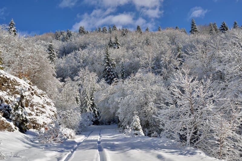 Camino y árboles del invierno cubiertos con nieve foto de archivo libre de regalías