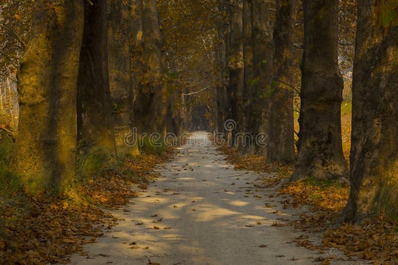 Camino y árboles en otoño imagen de archivo