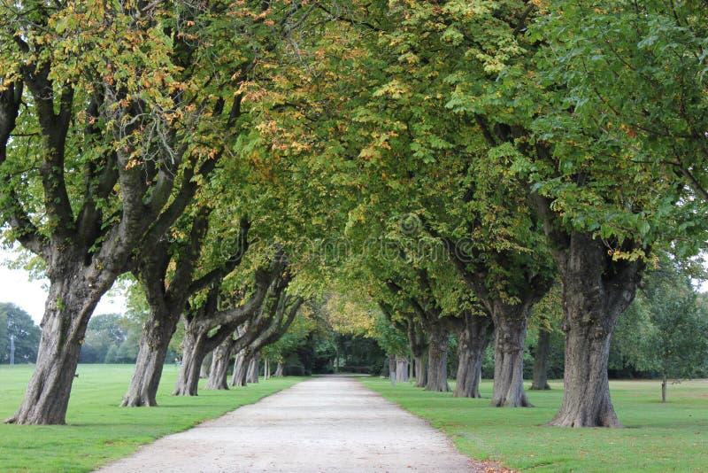 Camino y árboles ingleses del parque fotografía de archivo