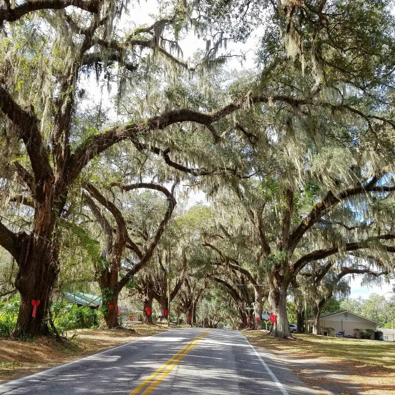 Caminos de la Florida fotos de archivo libres de regalías