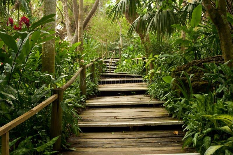 Caminos en la selva fotografía de archivo libre de regalías