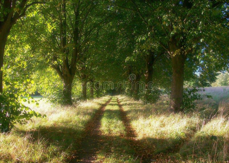 Caminos que recorren del bosque foto de archivo libre de regalías