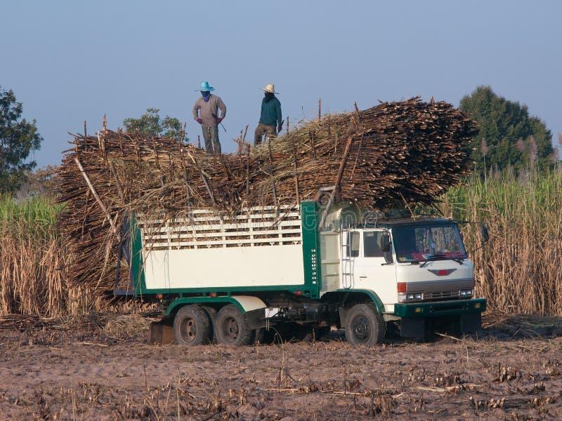 Camion caricato con la canna da zucchero immagine stock libera da diritti