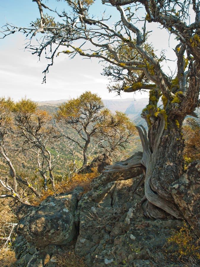 Camion esposto all'aria dell'albero in montagne rocciose del deserto fotografia stock