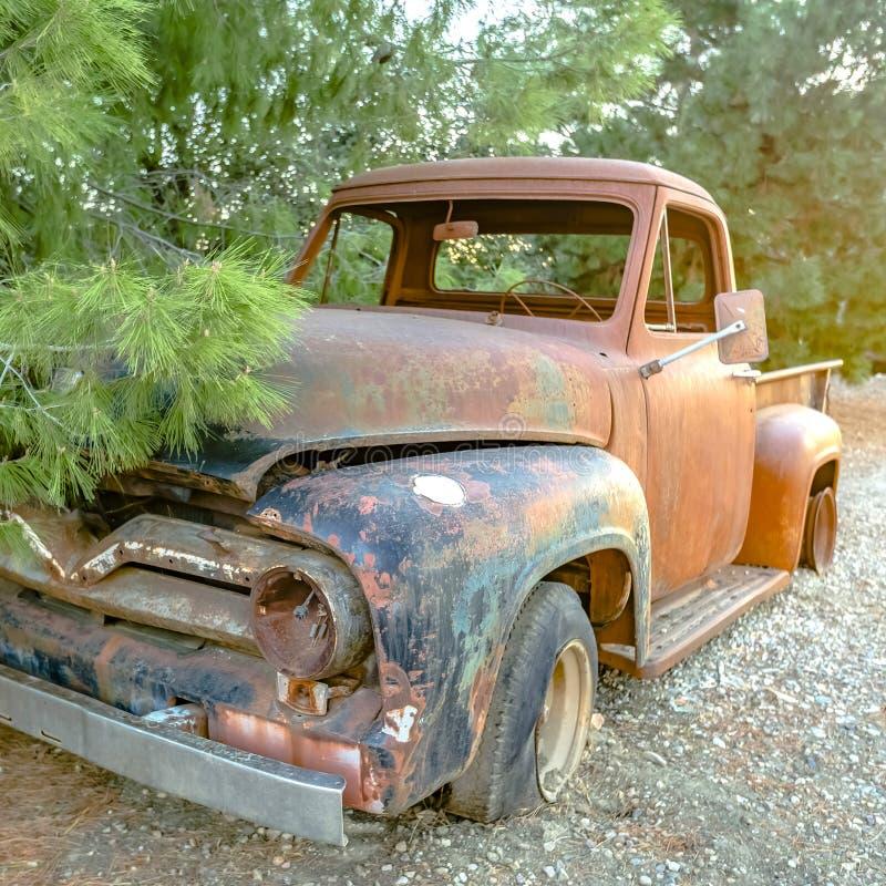 Camionete de oxidação ao lado das árvores prolíficos imagens de stock royalty free