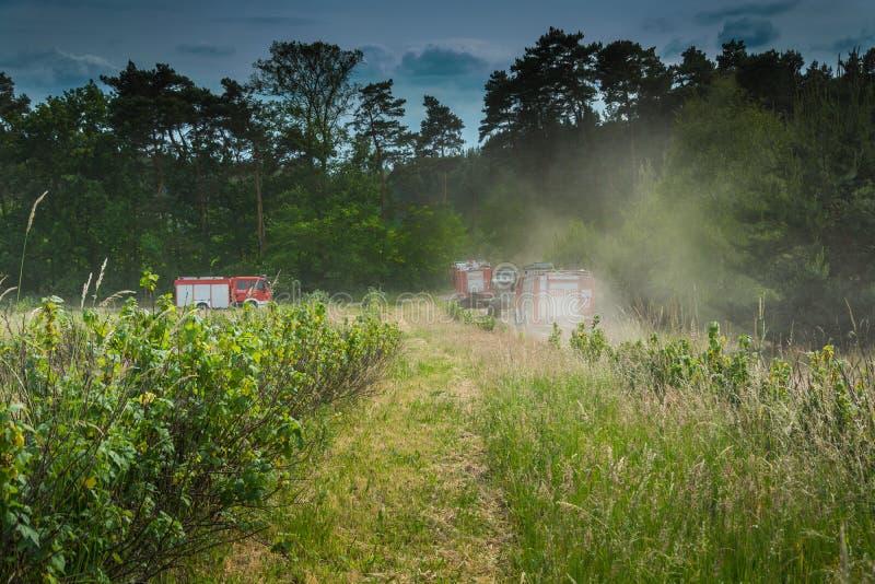Camions de pompiers allant s'éteindre la forêt image libre de droits