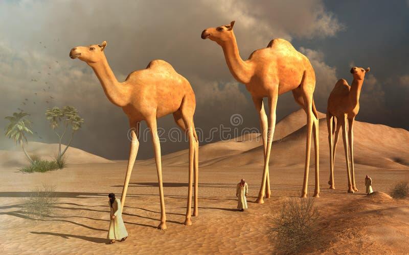 Cammelli ambulanti illustrazione di stock