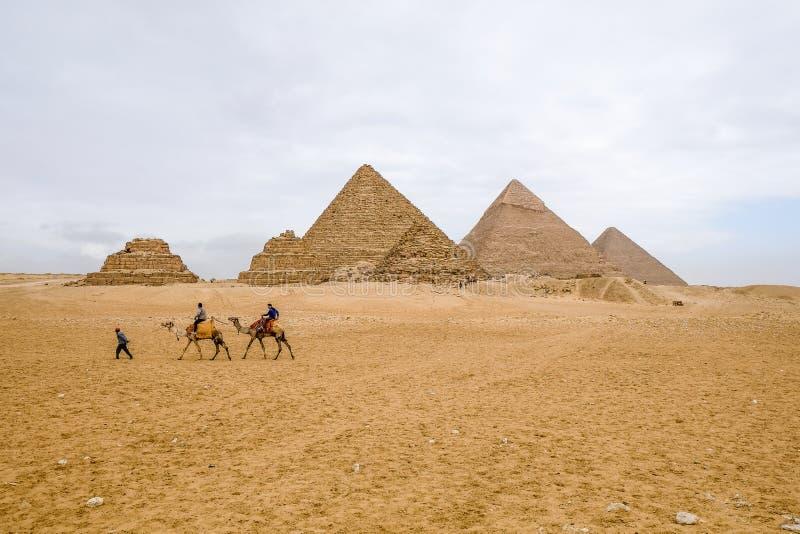 Cammelli che camminano davanti alle piramidi a Giza fotografie stock libere da diritti