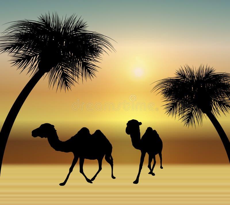 Cammelli nel deserto illustrazione di stock