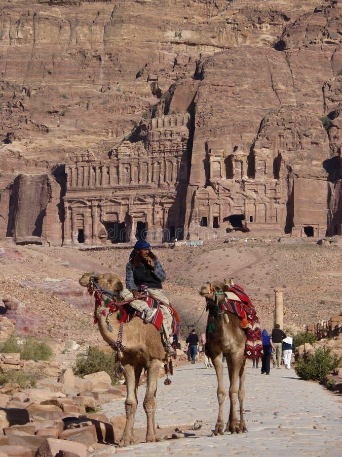 Cammelli nel PETRA in Giordania fotografia stock