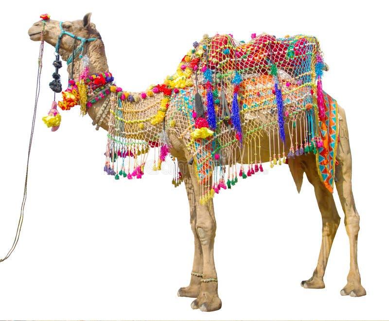 Cammello con la decorazione tradizionale immagine stock libera da diritti