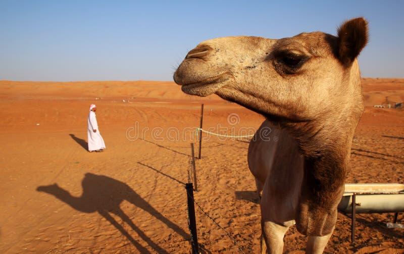 Cammello e un beduino fotografie stock