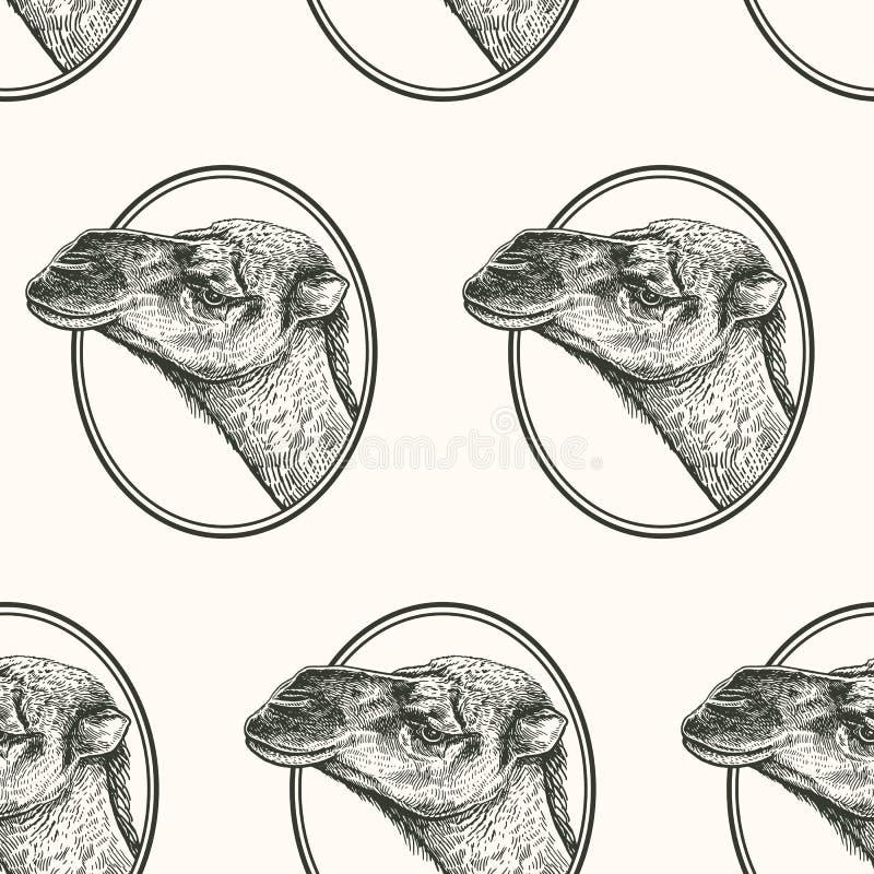 Cammello Modello senza cuciture con gli animali del ritratto dell'Africa Disegno della mano della fauna selvatica Arte dell'illus royalty illustrazione gratis