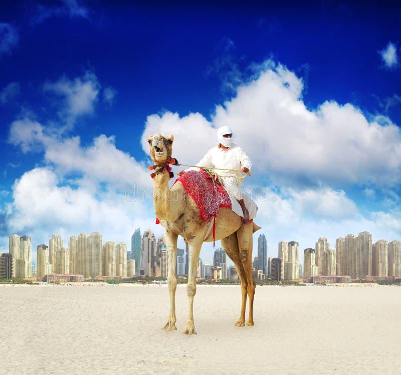 Cammello sulla spiaggia del porticciolo della Doubai fotografie stock
