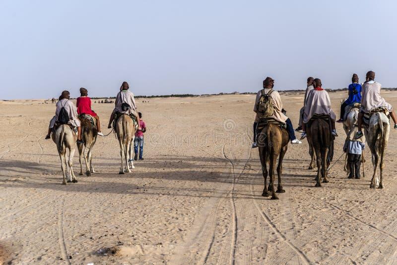 Download Cammello Tunisia fotografia editoriale. Immagine di dromedary - 55362041