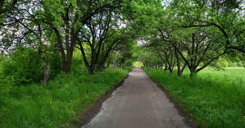 Cammina con gli alberi nel parco su entrambi i lati fotografia stock