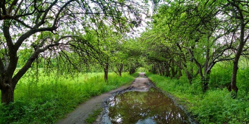 Cammina con gli alberi nel parco su entrambi i lati fotografia stock libera da diritti