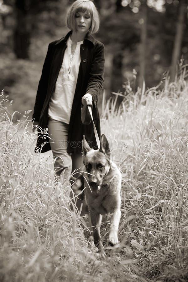 Cammina il cane immagine stock libera da diritti