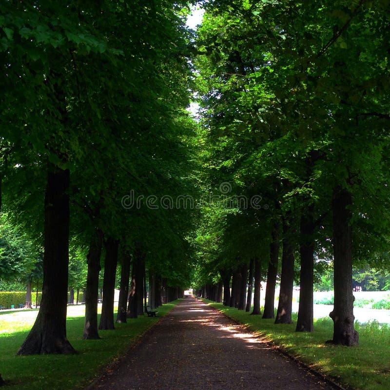 Camminando alla foresta fotografie stock libere da diritti