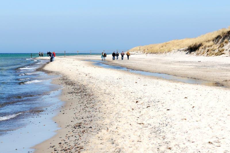Camminando attraverso il parco nazionale occidentale di area della laguna di Pomerania fotografie stock libere da diritti